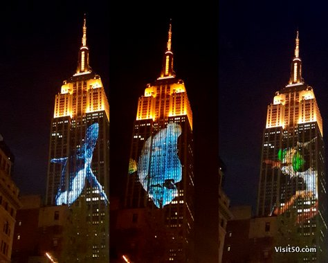 Endangered Animals - Empire State Building -003