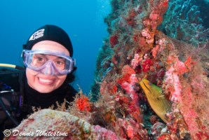 Meet and Greet with Green Moray Eel