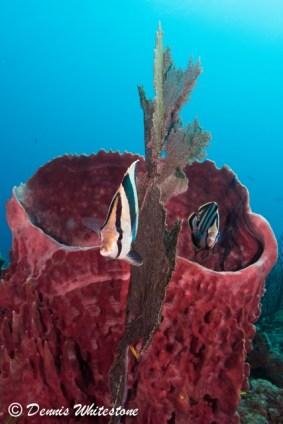 Barrel Sponge and friends