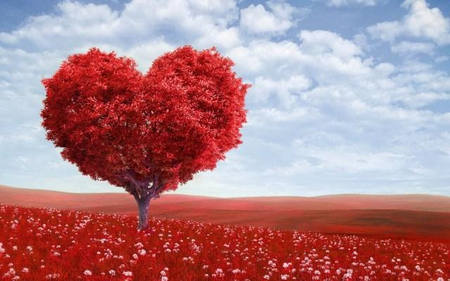 bild-von-einem-rote-baum-in-der-form-eines-liebe-herz-hd-lieben-hintergrundbilder