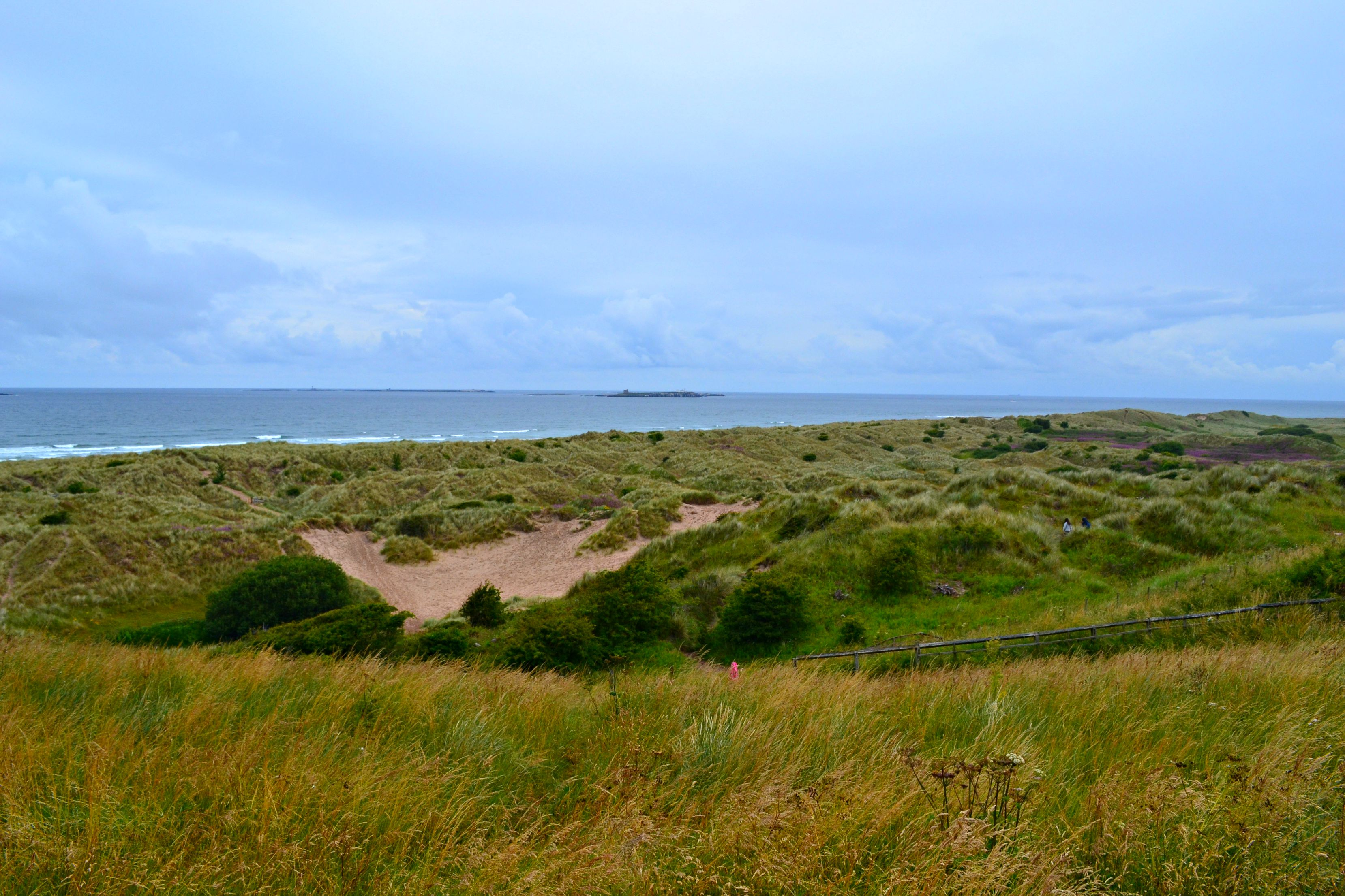 Bamburgh Castle nature surroundings
