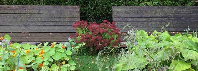 Deux grands bancs en bois dans le potager face à l'exubérance de la végétation