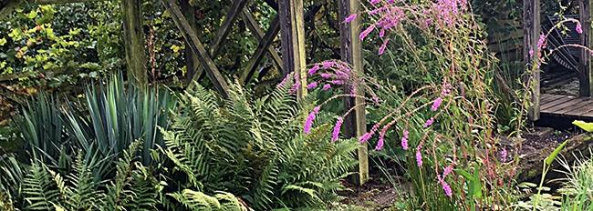 Les plantes aquatiques du grand bassin en fleurs
