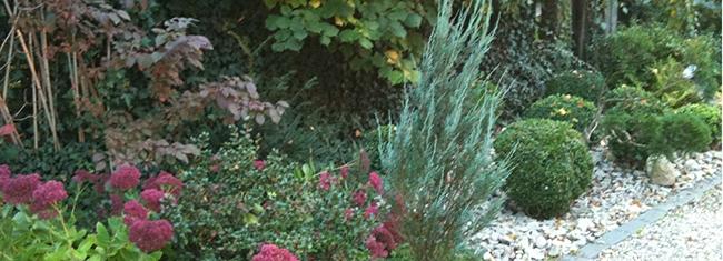 Le jardin d'ombre - Sedums, azalées et buis