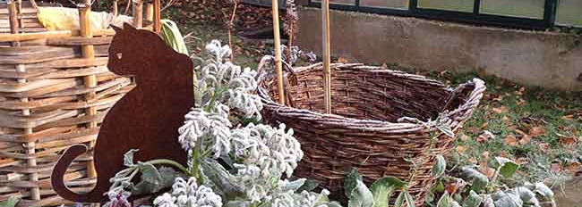 Les paniers qui abritent les pieds de rhubarbe en été