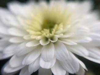 Flickr-foto met iPhone genomen