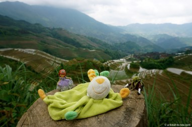 Chine, Guangxi, rizières en terrasses du Dos du dragon