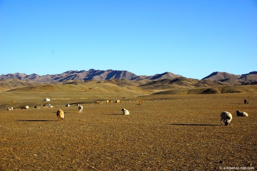 Mongolie, environs du canyon Yolyn Am