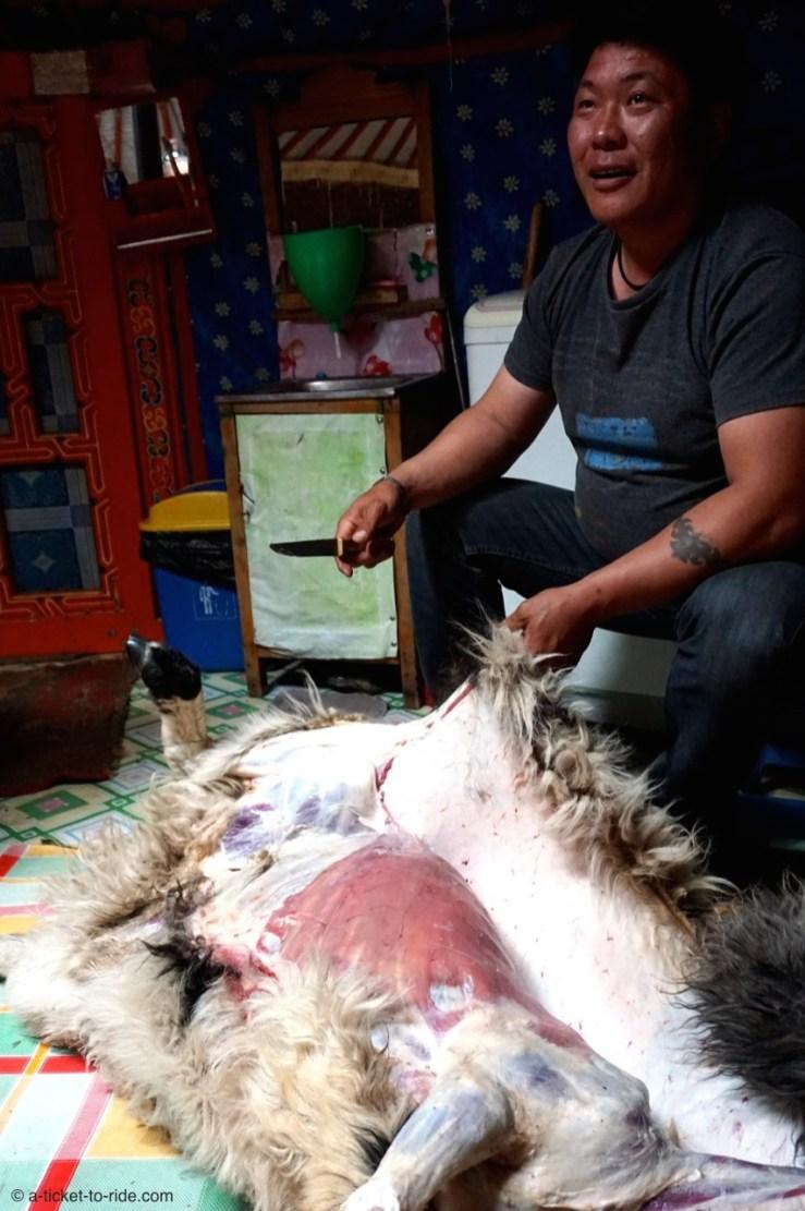 Mongolie, Vallée d'Orkhon, dépeçage du mouton