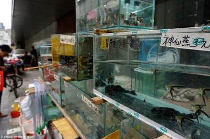 Chine, Pékin, vente de poissons