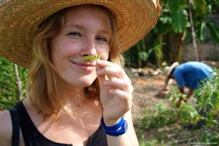 Thaïlande, Chiang Mai, ferme biologique de Da