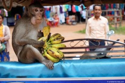 Cambodge, Siem Reap, Angkor
