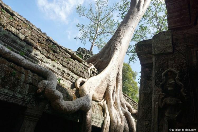 Cambodge, Angkor, Ta Prom