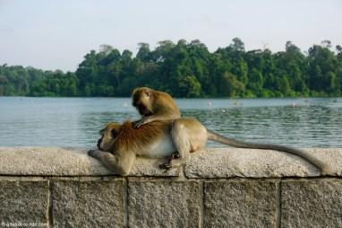 Singapour, MacRitchie Reservoir park