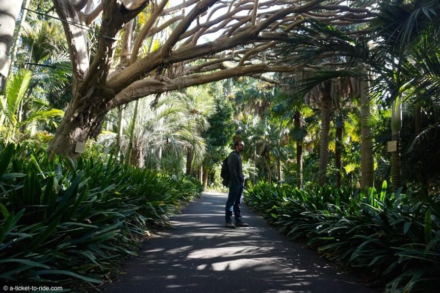 Australie, Sydney, jardin botanique
