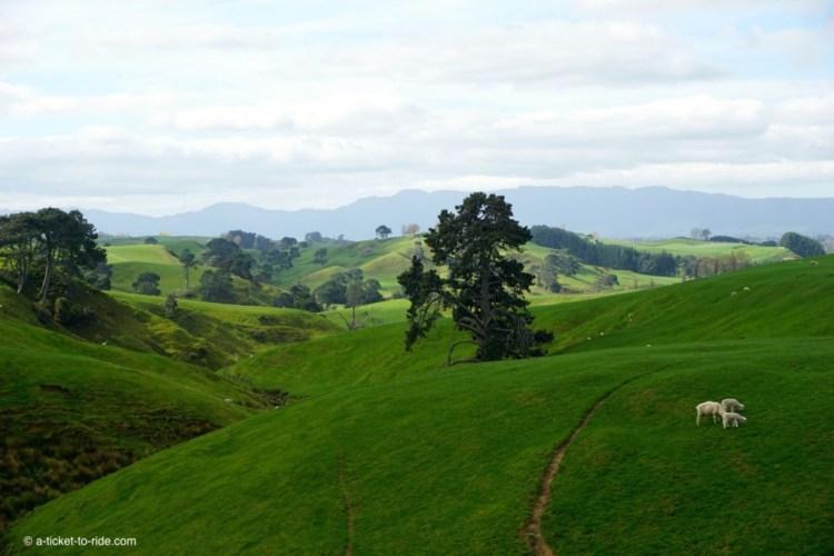 Nouvelle-Zélande, la Comté, Hobbiton
