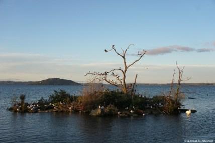 Nouvelle-Zélande, Rotorua lake