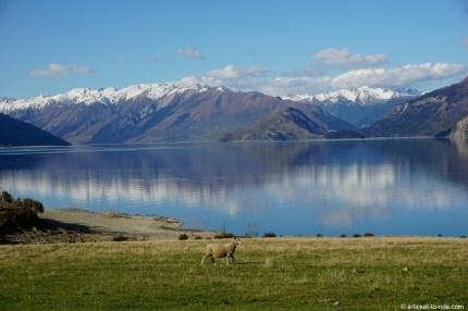 Nouvelle-Zélande, lac Hawea