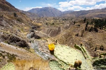 Pérou, canyon de Colca