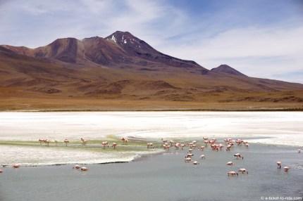 Bolivie, sud Lipez, laguna blanca