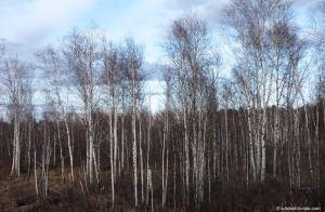 Russie, transsibérien, paysage