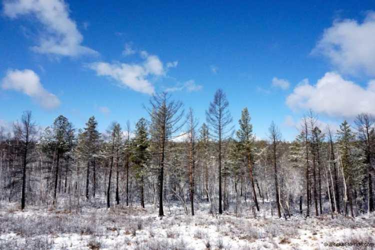 Russie, transsibérien, paysage enneigé