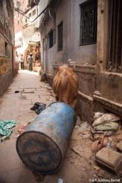 Inde, dans les rues de Varanasi