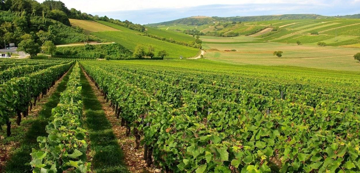 Panorama des vignes de Sancerre