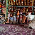 fes-babouches-chat