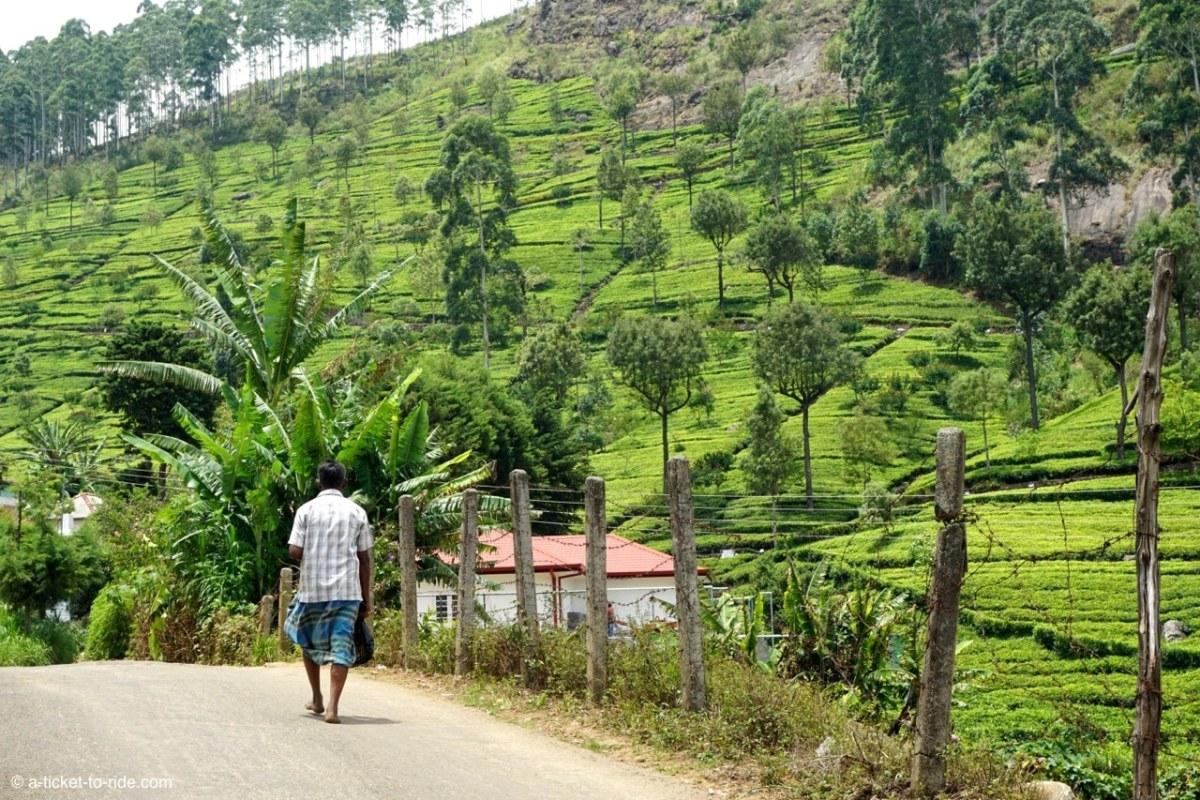 Sri Lanka, Haputale, route vers le Lipton seat