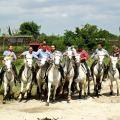 Camargue, gardian à cheval pour un lâcher de taureaux