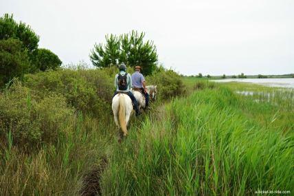 Camargue, marais à cheval