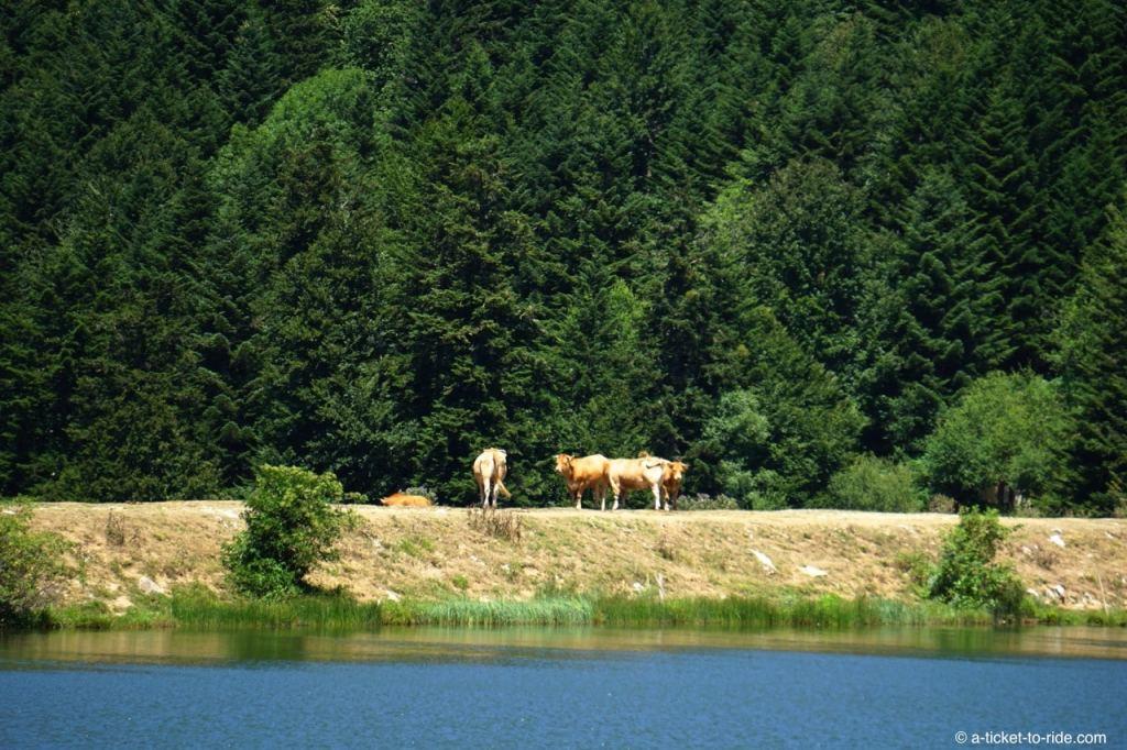 Hautes-Pyrénées, Lac de Payolle