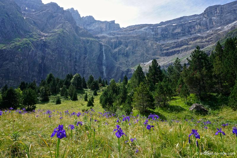 Cirque de Gavarnie, cascade et fleurs