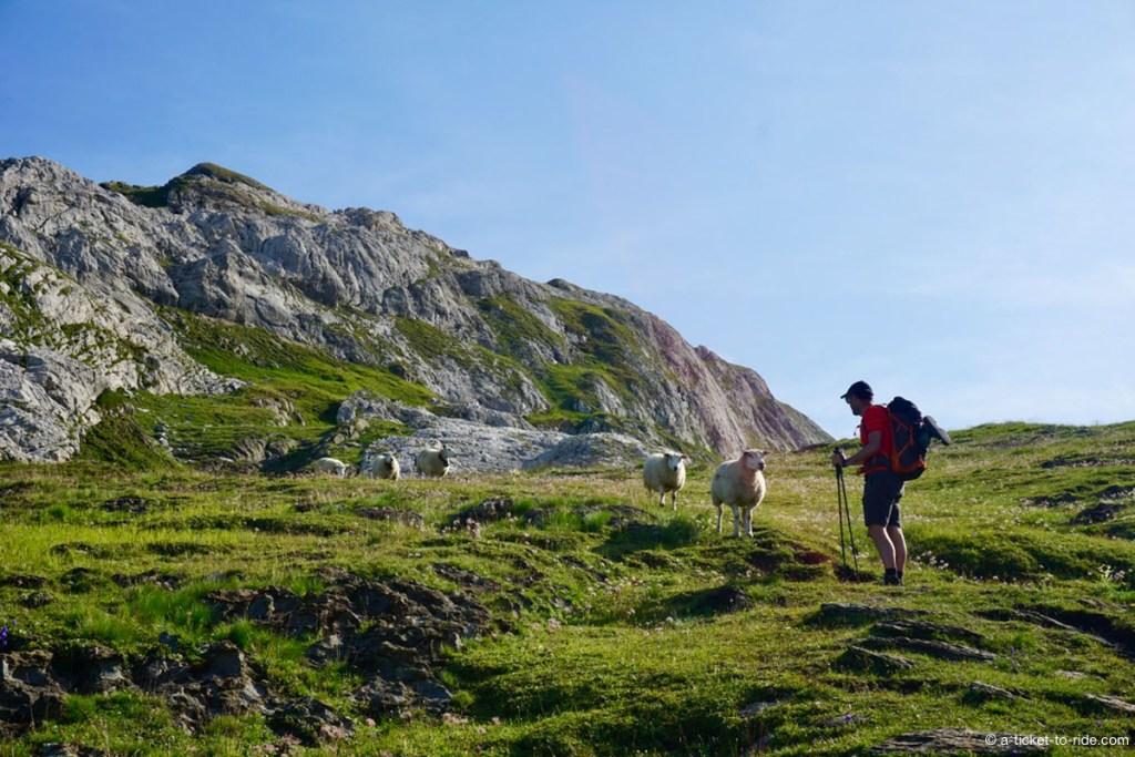 Rencontre avec des brebis, Alpes