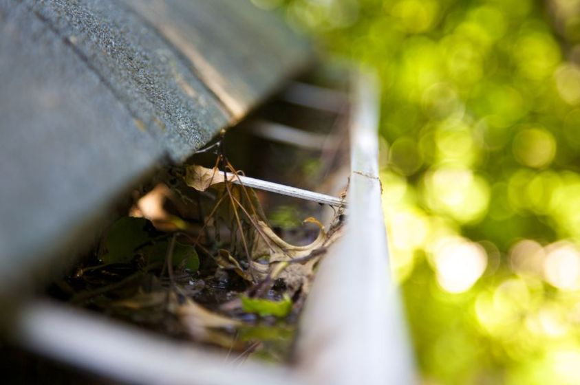 gutters clogged and in need of cleaning