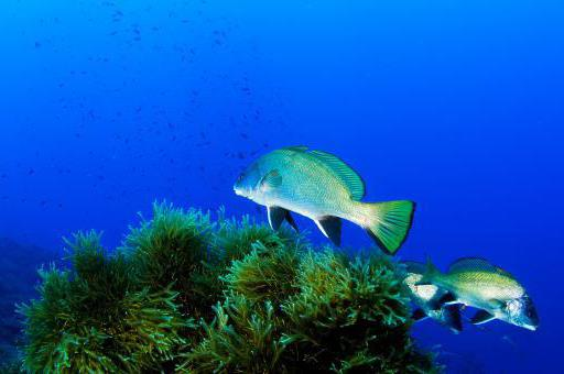 Nueva ronda de negociaciones en Naciones Unidas para avanzar en el Convenio para la protección y uso sostenible de los océanos