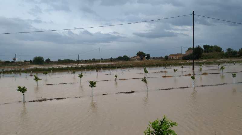 """ASAJA Alicante pide al Consell que apruebe en el pleno de Orihuela de este viernes un Real Decreto Ley """"a medida/Ad Hoc"""", a la altura de la envergadura de la catástrofe que hemos padecido"""