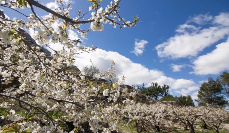 La Vall de Gallinera / Foto: Shutterstock
