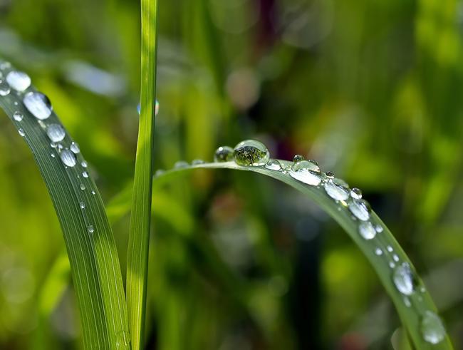 03-22_dia-mundial-del-agua_plantas_m