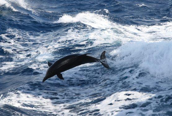 mm2_delfines_mulares_mozambique07_10.JPG