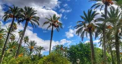 Palmeral de Elche, foto de Paco Ciclón