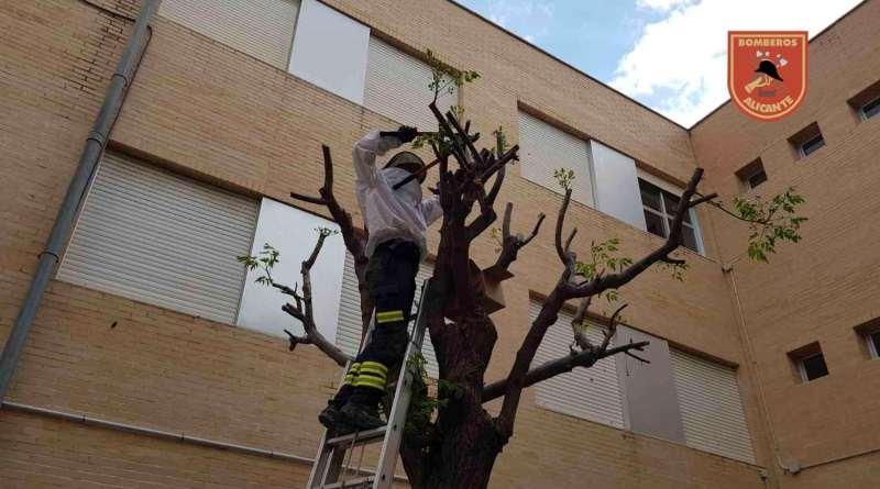 Los bomberos del SPEIS retiran una colmena y cuatro enjambres y rescatan más de 90.000 abejas en el IES Gran Vía en Alicante