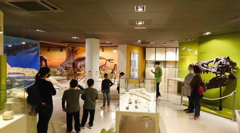 Las visitas al Museo Paleontológico de Elche aumentan un 28% en Semana Santa