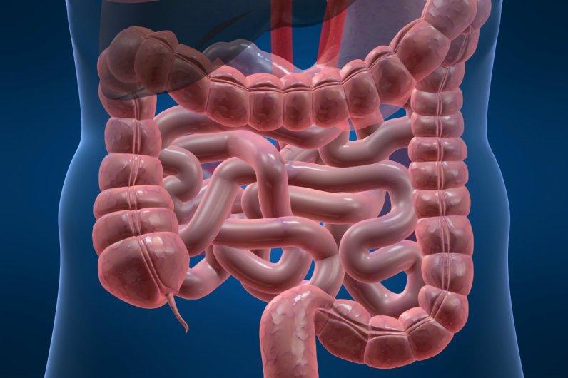 transito-intestinal-05-formas-de-lograr-que-los-intestinos-funcionen-mejor-1