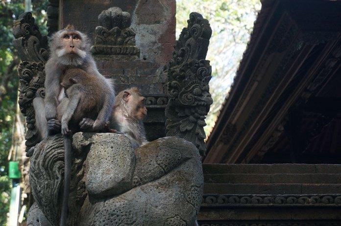 monkey-forest-ubud-bali-3-min