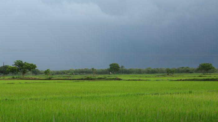 dark skies green fields