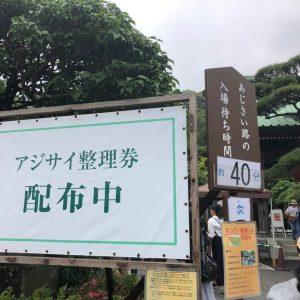 長谷寺 紫陽花待ち