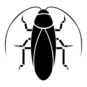 American Cockroach aka Waterbug