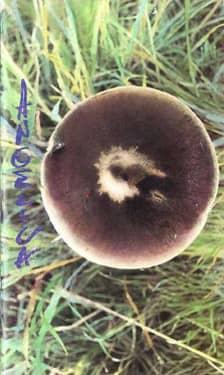 AngelicA 4 - Festival Internazionale di Musica - 1994